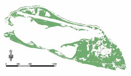 东沙植物生态